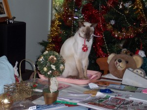 Cat amongst Xmas decorations